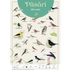 """Poster """"Păsări din sate""""..."""